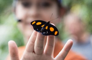 UF Online image of Biology student holding butterfly outdoors