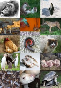 UF Online compilation image depicting many species of birds, mammals, bugs, reptiles and fish